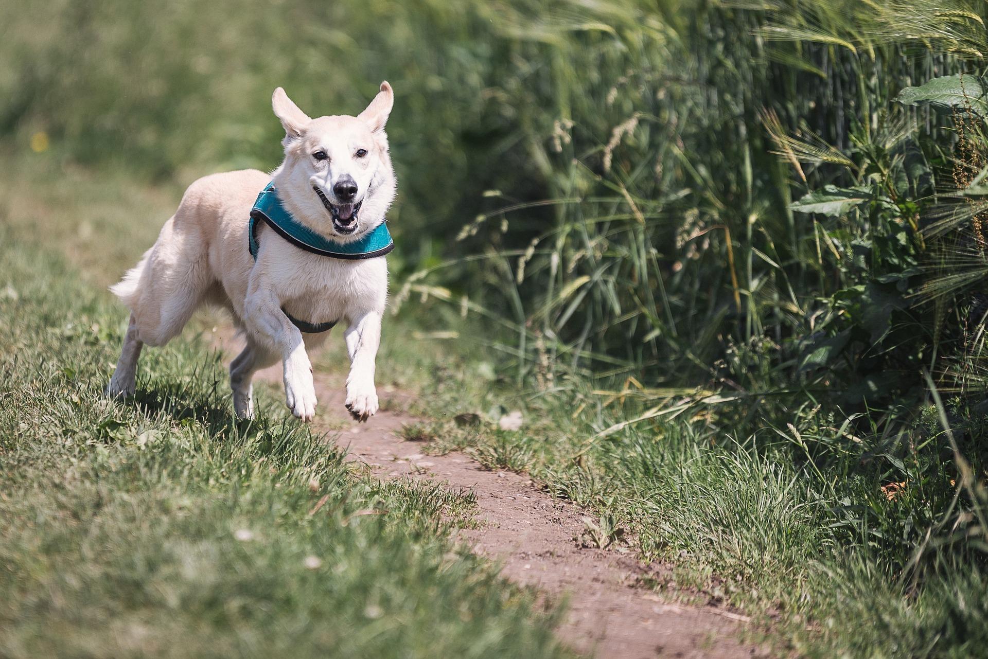 Hond loopt in gebied waar geen aanlijnplicht geldt VVV Texel