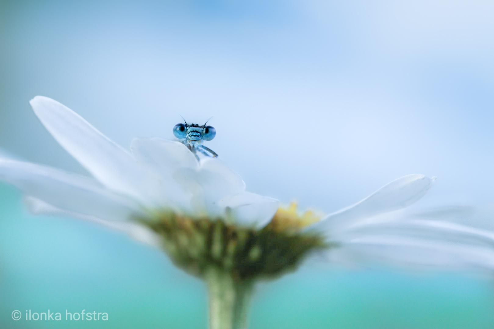 Insect op bloem winnende natuurfoto VVV Texel