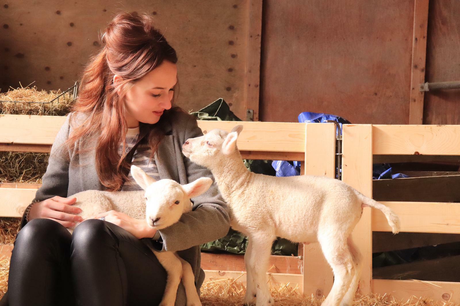 Lammetjes knuffelen bij de schapenboerderij VVV Texel fotograaf Rosalie den Ouden