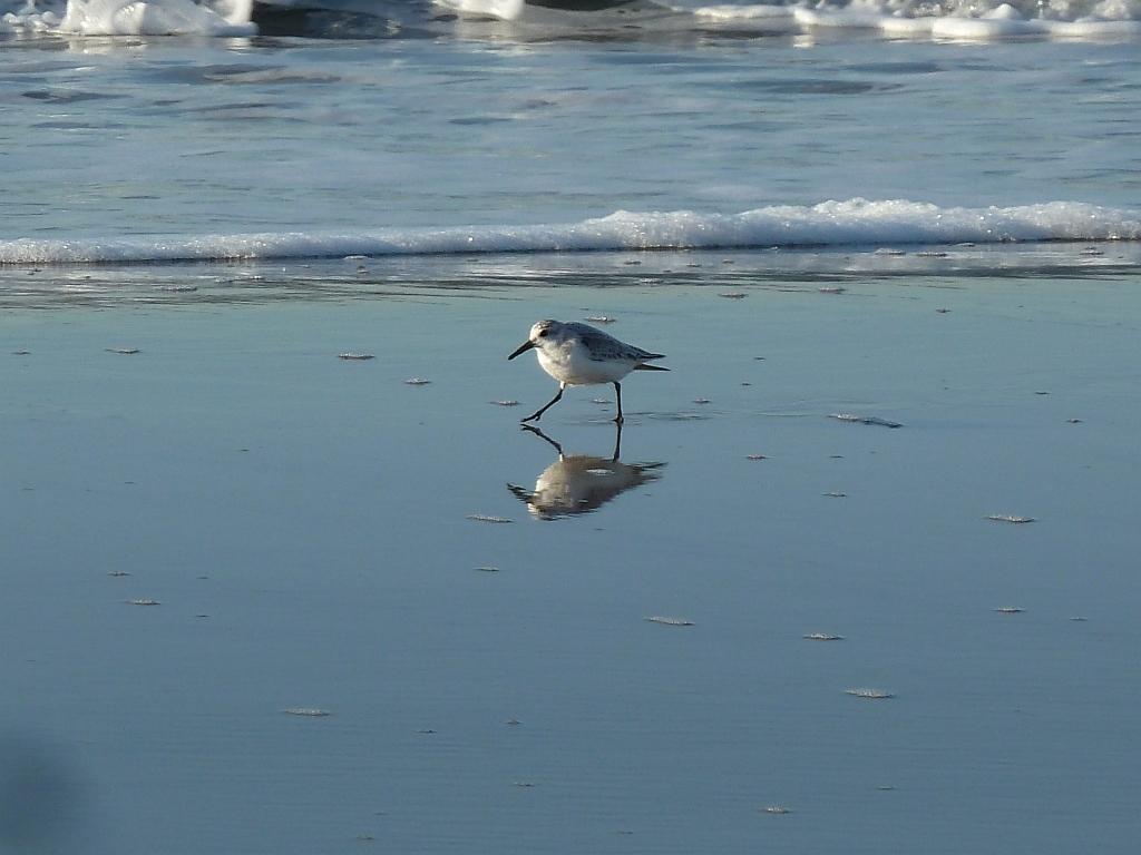Strandloper op het strand VVV Texel fotograaf Marc Plomp