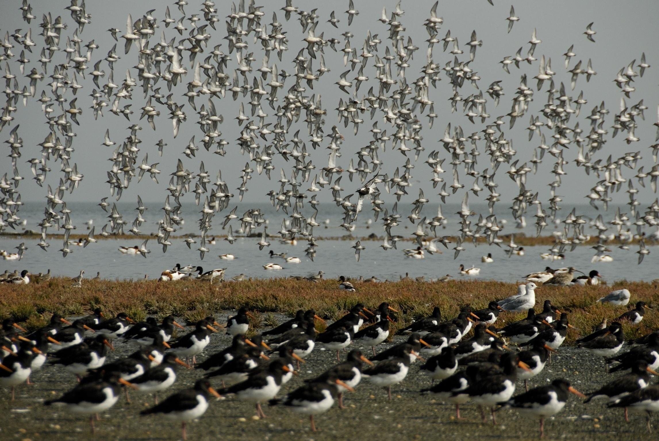Vogels bij Vogelboulevard Natuurmonumenten VVV Texel