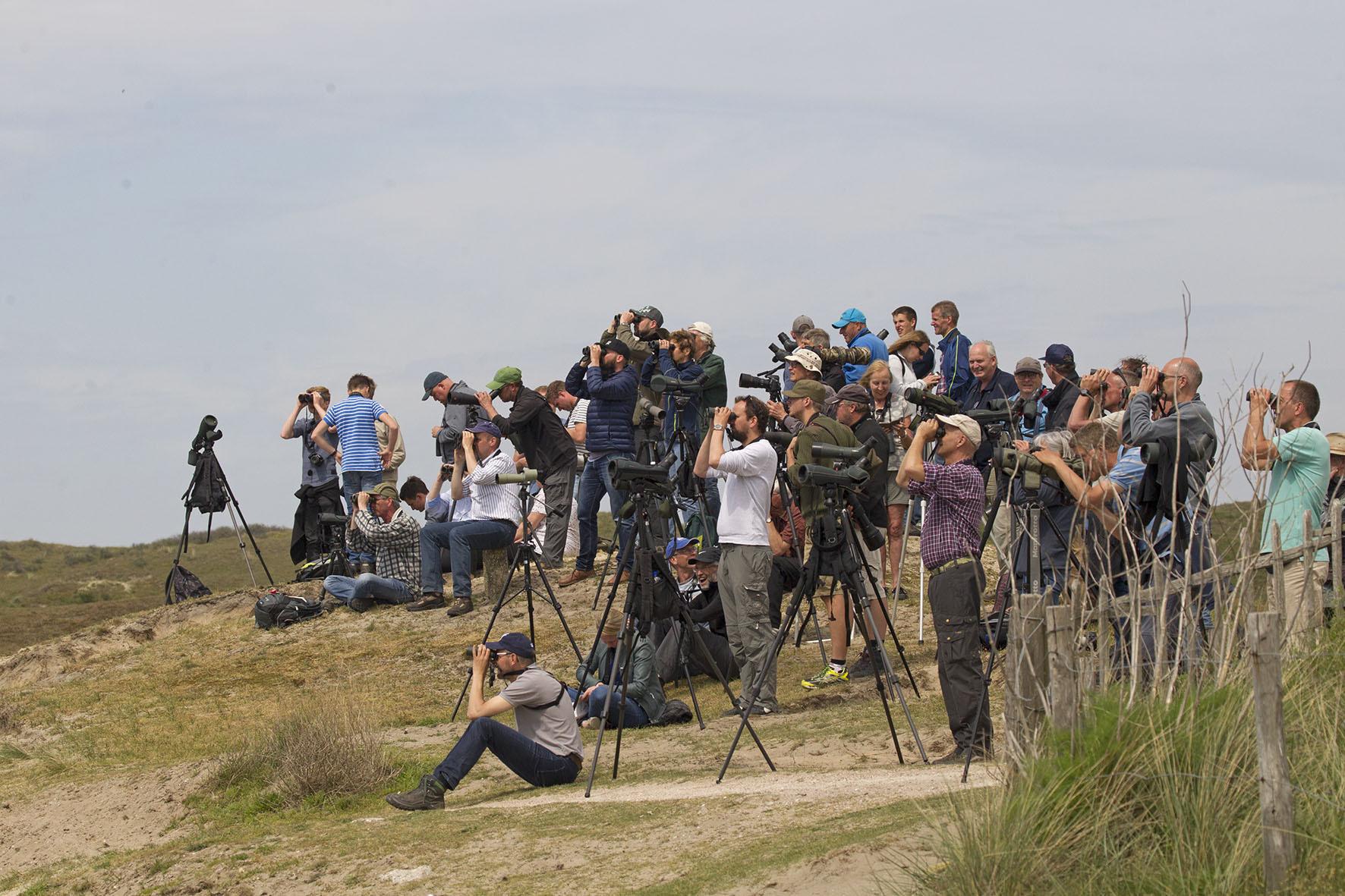 Vogels spotten tijdens de Texel Big Day VVV Texel