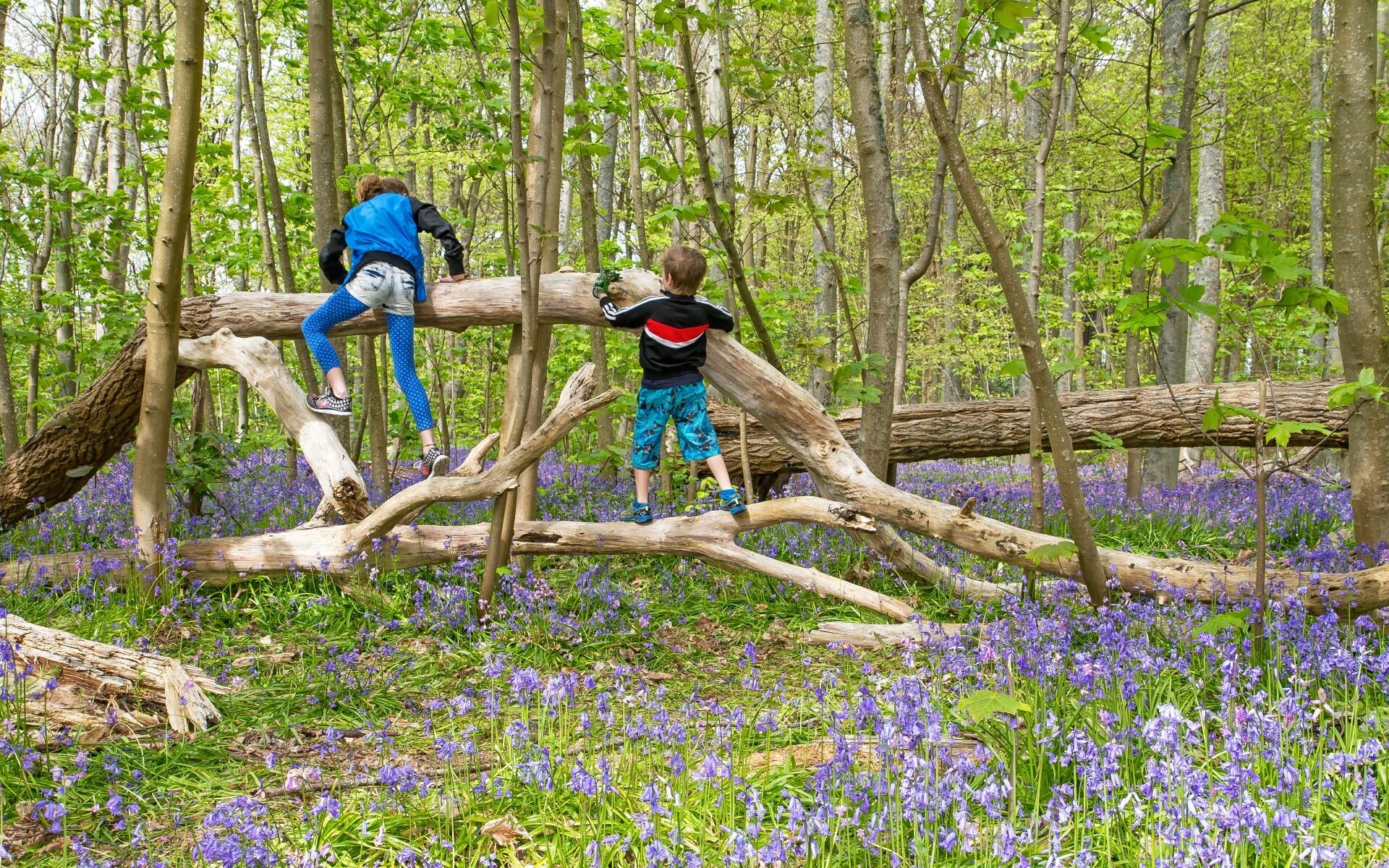 Kinderen spelen in het bos De Dennen VVV Texel fotograaf Justin Sinner