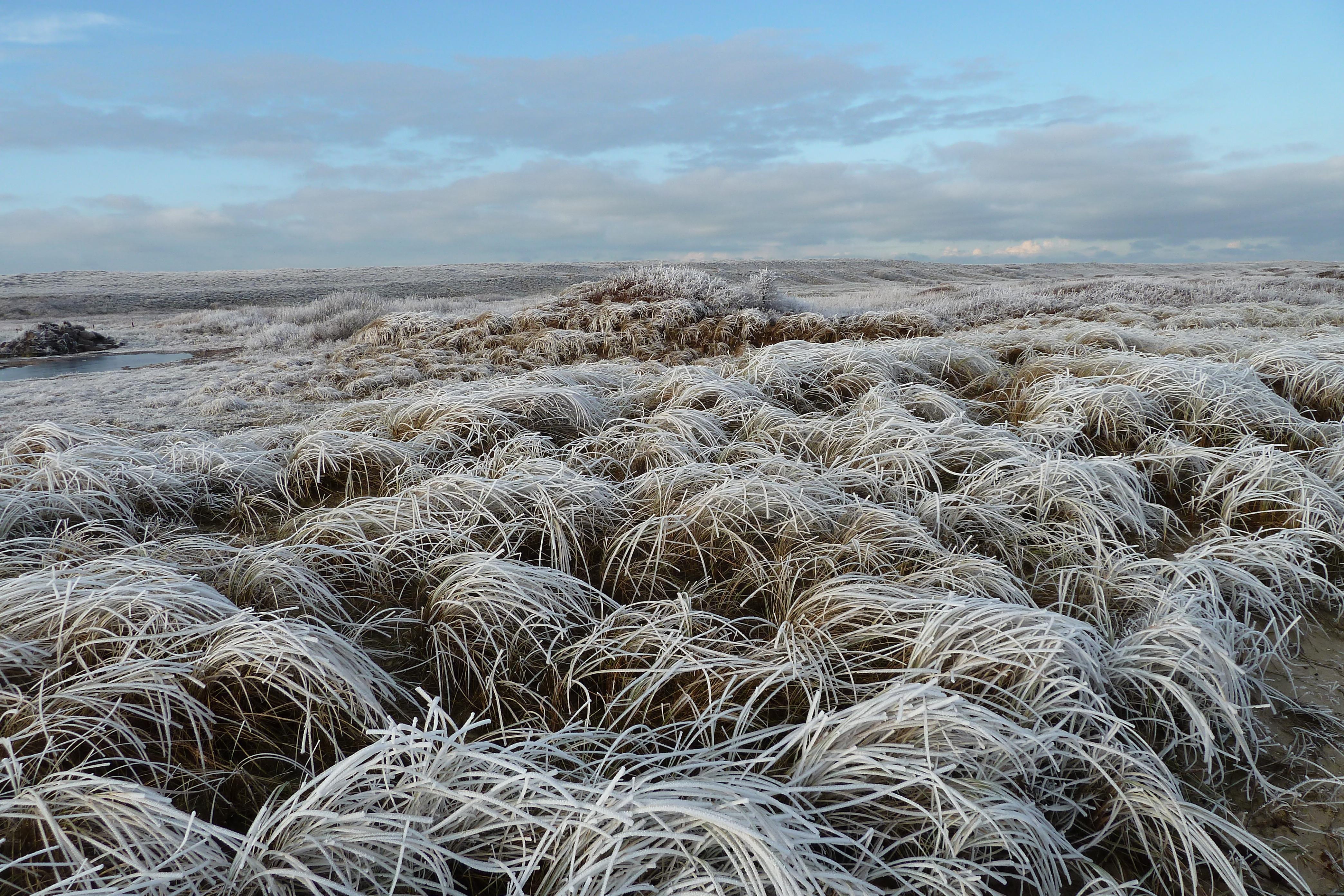 Vorst op helmgras in de winter fotograaf Gosse Kruger VVV Texel