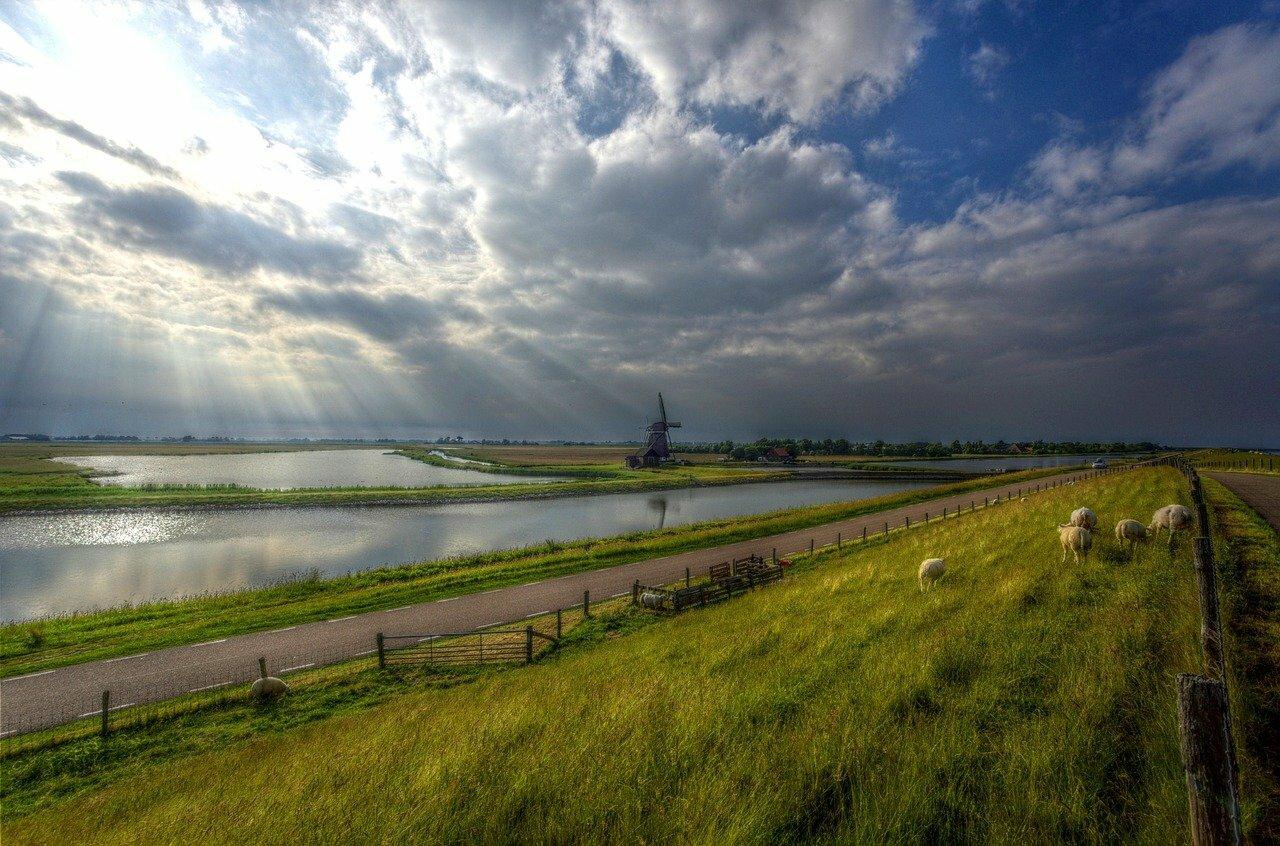 Molen het Noorden waddendijk met schapen VVV Texel