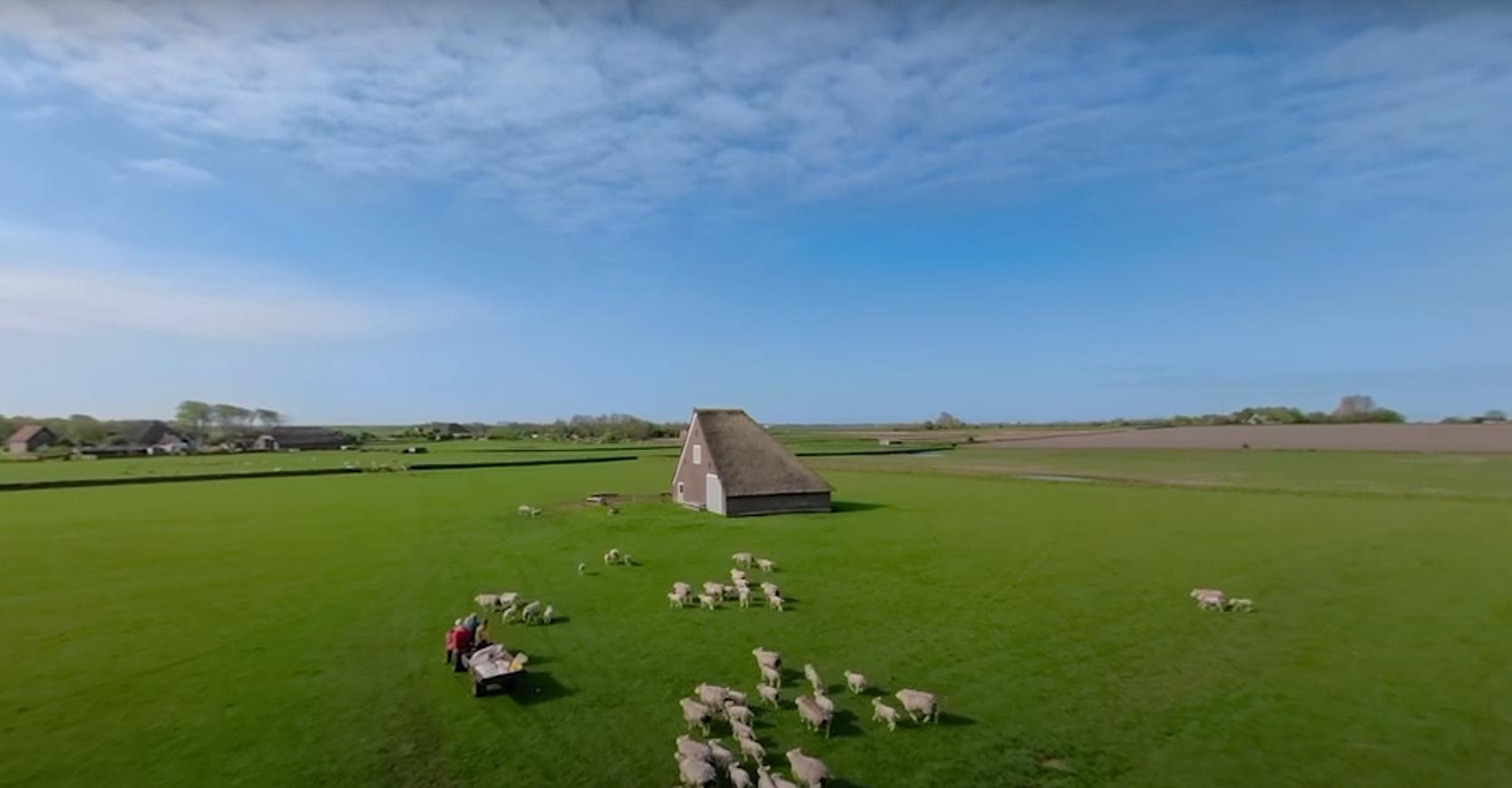 Schapen Hoge Berg met boer video lente VVV Texel